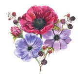Hand-drawn watercolor illustration of the floral bouquet. Tender spring drawing of violet and pink anemones flowers and blackberry in the composition Royalty Free Illustration