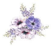 Hand-drawn watercolor illustration of the floral bouquet. Tender spring drawing of violet and white anemones flowers and hyacinth in the composition Vector Illustration