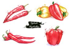 Free Hand-drawn Watercolor Illustration Of The Different Peppers - Chili Pepper And Sweet Red And Yellow Pepper Stock Photography - 110938082