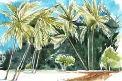 Hand drawn watercolor illustration of palm trees. Coastline of Palm Beach. Royalty Free Stock Image