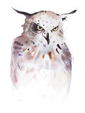 Hand drawn watercolor illustration portrait of owl.  Stock Images