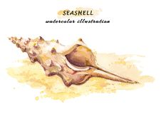 Hand drawn watercolor illustration of a seashell on sundy beach. stock illustration