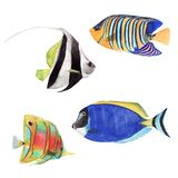 Hand drawn watercolor illustration set of tropical fish isolated on white background royalty free illustration