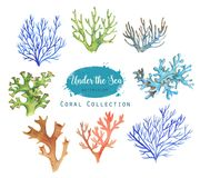 Set of marine objects. Hand-drawn watercolor illustration of the under the sea. Coral collection Royalty Free Illustration