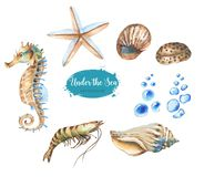 Set of marine objects. Hand-drawn watercolor illustration of the under the sea. Set of marine objects isolated on the white background Royalty Free Illustration