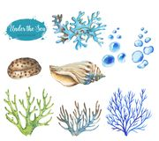 Set of marine objects. Hand-drawn watercolor illustration of the under the sea. Set of marine objects isolated on the white background Stock Illustration