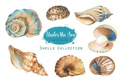 Set of marine objects. Hand-drawn watercolor illustration of the under the sea. Shells collection Vector Illustration