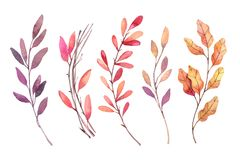 Hand drawn watercolor illustrations. Autumn Botanical clipart. Set of fall leaves, herbs and branches. Floral Design elements. Perfect for invitations stock illustration
