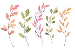 Hand drawn watercolor illustrations. Autumn Botanical clipart. S. Et of fall leaves, herbs and branches. Floral Design elements. Perfect for invitations vector illustration