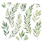 Hand drawn watercolor illustrations. Botanical clipart. Set of G. Reen leaves, herbs and branches. Floral Design elements. Perfect for wedding invitations stock illustration