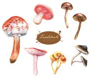 Hand-drawn watercolor illustrations of the different toadstools stock photography