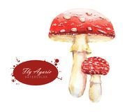 Hand-drawn watercolor illustrations of the fly agaric royalty free stock image