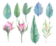 Hand drawn watercolor illustrations. Spring leaves and Peony bud