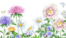 Hand drawn watercolor image of beautiful flowers Royalty Free Stock Image
