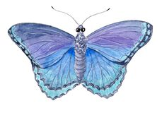 Hand drawn watercolor insect beautiful exotic butterfly