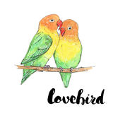 Hand drawn watercolor isolated bird lovebird with handwritten wo Stock Photography