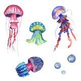 Hand drawn watercolor jellyfish set with isolated medusa on white background vector illustration