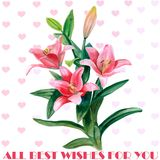 Hand drawn watercolor lily flowers isolated on white background. Spring blossom flowers. Ideal poster for Valentines day Stock Photography