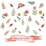 Hand drawn watercolor nature set. Flowers, brunch Royalty Free Stock Photo