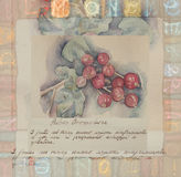 Hand drawn watercolor painting decorative -Ribes Grossularia Royalty Free Stock Images