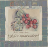 Hand drawn watercolor painting decorative -Ribes Grossularia Stock Photography