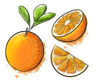 Hand drawn watercolor painting orange on white background. Sketch food  illustration. Stock Photo
