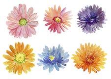 Set of autumn flowers. Watercolor illustration. chrysanthemum Stock Image