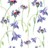 Seamless pattern with wild flowers, watercolor illustration Stock Photography