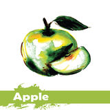 Hand drawn watercolor painting on white background. fruit apple Stock Photography