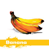 Hand drawn watercolor painting on white background. fruit banana Royalty Free Stock Photo