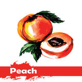 Hand drawn watercolor painting on white background.  fruit peach Royalty Free Stock Photos