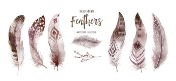 Free Hand Drawn Watercolor Paintings Vibrant Feather Set. Boho Style Wings. Illustration Isolated On White. Bird Fly Design Royalty Free Stock Photography - 165716867