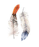 Hand drawn watercolor paintings vibrant feather set. Boho style wings. illustration isolated on white. Bird fly design Royalty Free Stock Photography