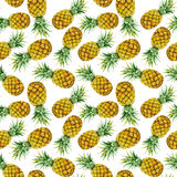 Hand drawn watercolor pineapples Royalty Free Stock Photography