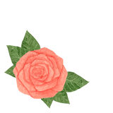 Hand drawn watercolor pink rose with leaves isolated on the white background Stock Image