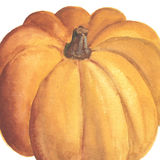 Hand drawn watercolor pumpkin Royalty Free Stock Image