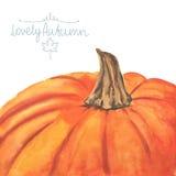 Hand drawn watercolor pumpkin Stock Images