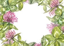 Hand-drawn watercolor red clover flower illustration. Painted botanical three-leaved meadow grass, isolated on white. Background. Happy St.Patrick `s Day card Royalty Free Stock Image
