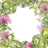 Hand-drawn watercolor red clover flower illustration. Painted botanical three-leaved meadow grass, isolated on white. Background. Happy St.Patrick `s Day card Stock Photos