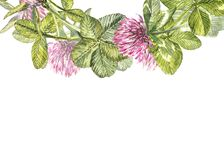 Hand-drawn watercolor red clover flower illustration. Painted botanical three-leaved meadow grass, isolated on white. Background. Happy St.Patrick `s Day card Stock Photo