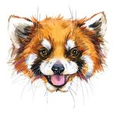 Watercolor red panda illustration. fashion Tee shirt design Stock Photography