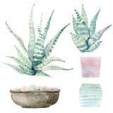 Hand drawn watercolor saguaro cactuses Stock Image