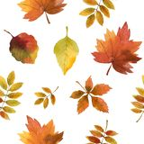 Hand drawn watercolor, Seamless autumn leaves royalty free illustration