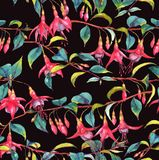 Watercolor seamless floral pattern. Hand-drawn watercolor seamless floral pattern with colorful vibrant pink fuchsia branches. Tropical exotic flowers blossom on Stock Illustration