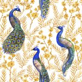 Hand drawn watercolor seamless pattern with Chinese peacocks and golden sakura plants. Chinoserie style Royalty Free Stock Photography