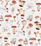 Hand-drawn watercolor seamless pattern of the different mushrooms royalty free stock images