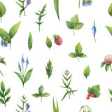 Hand drawn watercolor seamless pattern of herbs and spices. Royalty Free Stock Photography