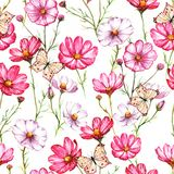 Hand-drawn watercolor seamless pattern with pink and white kosmea flowers with butterflies. Colorful chamomile blossom on the repeated print for the textile Royalty Free Stock Images