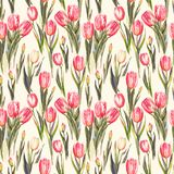 Watercolor seamless pattern with pink and white tulip flowers. Hand-drawn watercolor seamless pattern with pink and white tulip flowers. Repeated spring print Vector Illustration