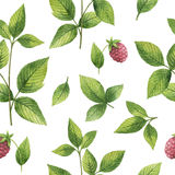 Hand drawn watercolor seamless pattern of Raspberry leaf. Stock Photo